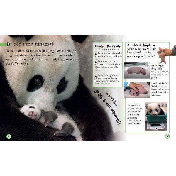 Tá mé ag fás Panda